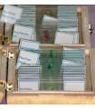 Set 25 preparate pentru microscop - De la organisme unicelulare la insecte