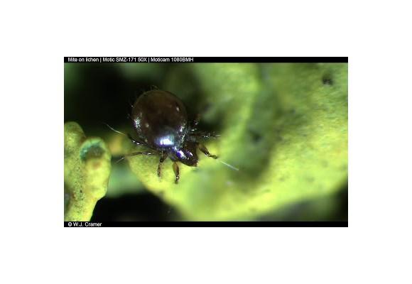 Ascunsi printre muschi si licheni